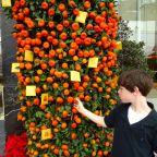 Airport Oranges