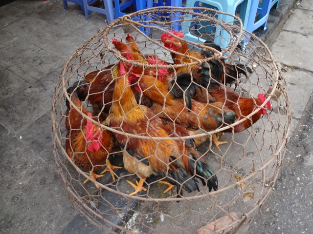 Fresh chicken for sale