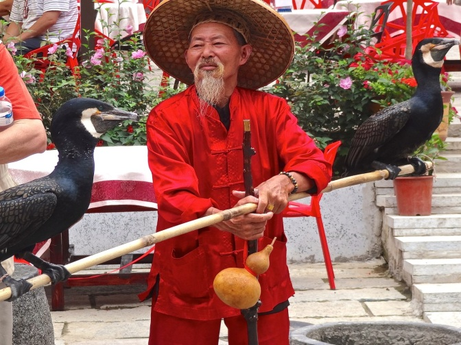A pair of commorants sit tied to  a pole in a display of the traditional (but cruel) practice of bird fishing.  This man does less fishing than he does posing for pictures. The price: 20 yuan.