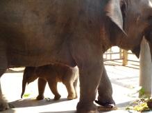 2012 Thailand - 340