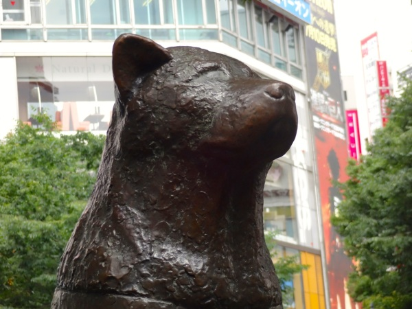 Hachiko in bronze-the original was melted down for bombs in World War II outside of Shibuya Station is one of the most popular meeting places in all of Tokyo.