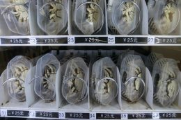 china-live-crab-vending-machine